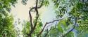upabove_treecanopy